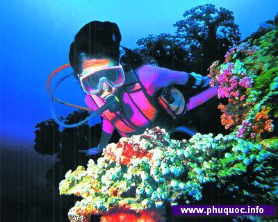 PhuQuoc_diving1